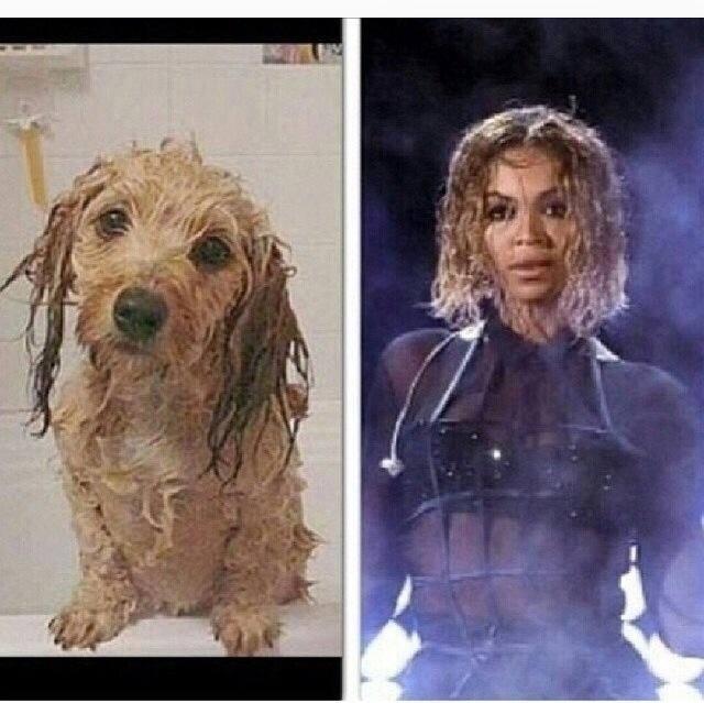 beyonce wet dog meme